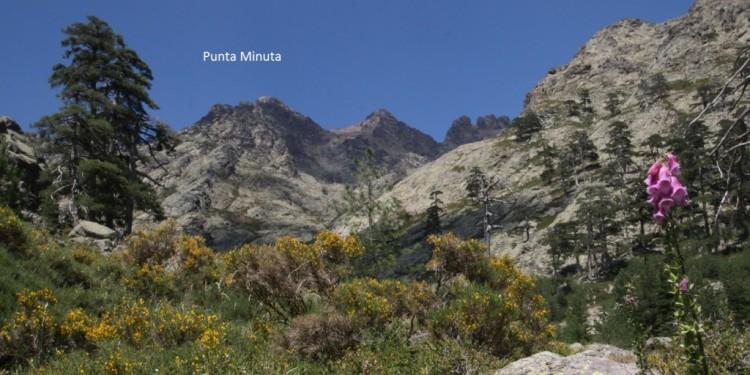 Projekt Juni 2016: Neues Gipfelkreuz auf der Punta Minuta (2556 m)