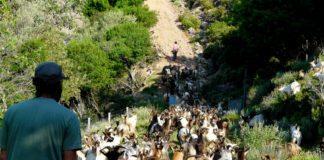 Korsika erleben