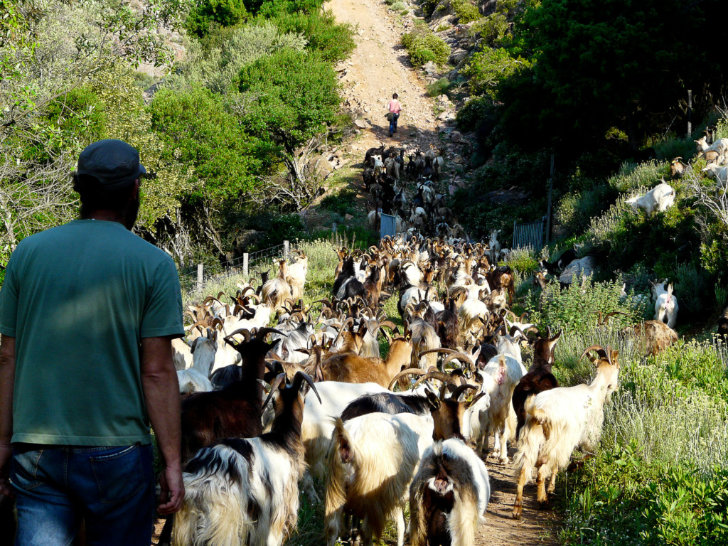 Entdeckt mit uns hautnah das authentische Korsika!