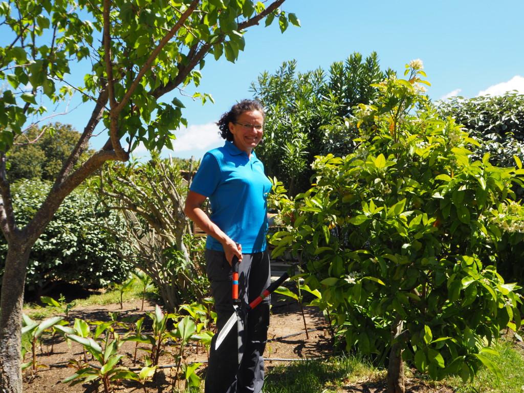 Es grünt so grün, wenn Korsikas blüten blühen … – ein Bericht aus dem Rundbrief 2016