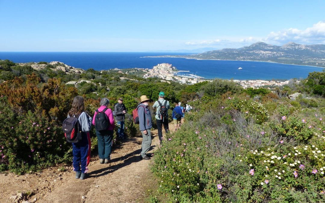Immer wieder Korsika